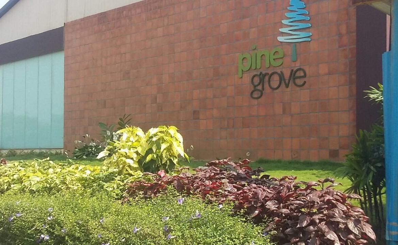 Ardente Pine Grove