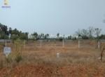 Vertex Green Reserve Kalaparru actual image